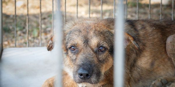 petizione: Hawaii: Give Abused Cats and Dogs a Voice in Court!, Hawaii