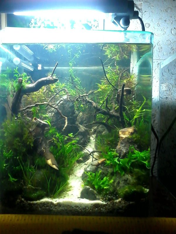 694 best planted nano tanks images on pinterest fish for Best fish for nano tank