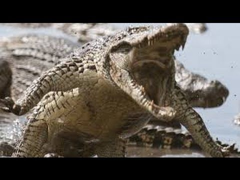 Top Ten The Scariest and Biggest Animals In Africa