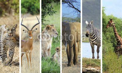 Fotobehang Afrikaanse dieren