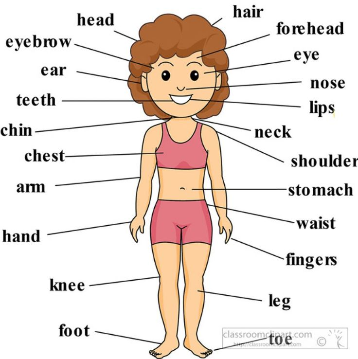 Girl Anatomy Body Parts Labeled