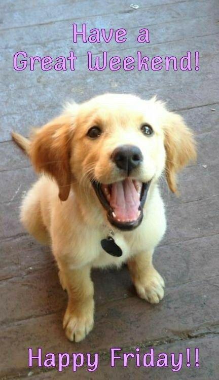 Good Morning! Happy Friday! #tgif #gm #gmw #goodmorning #good #morning #morningpost #fridays #fridaymeme #friday #dogs #thegrind #coffee #morninggrind #happyfriday #happy #meme #dog #memes #morningmotivation #puppy❤️ #puppy #flowers #wildflowers