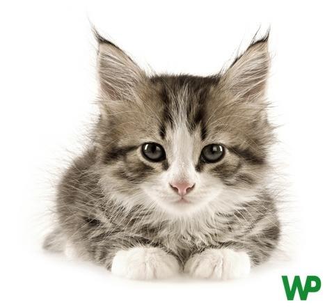 Alimentación y accesorios para gato.  Tienda de mascotas online Wakuplanet.com