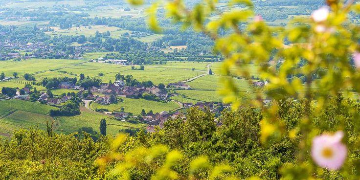Crédit A.Doire / Bourgogne Tourisme - Vins