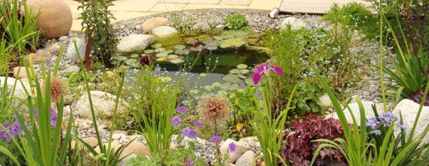 Einen Gartenteich selber bauen - Der große Teich-Ratgeber