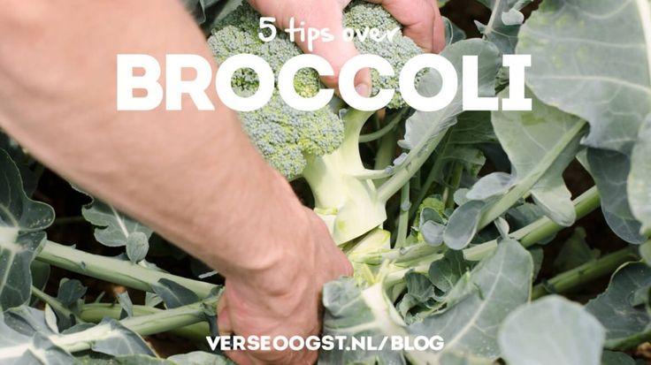 5 tips over broccoli!