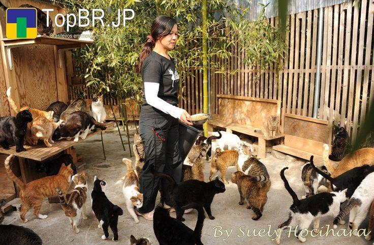 Brasileira abriga voluntariamente mais de 300 gatos abandonados no Japão