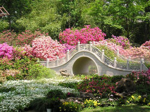 ♔ Enchanted Fairytale Dreams ♔Pink Flower, Flower Gardens, Finding Neverland, The Bridges, Places, Beautiful Gardens, Japan Gardens, Dreams Gardens, Gardens Bridges