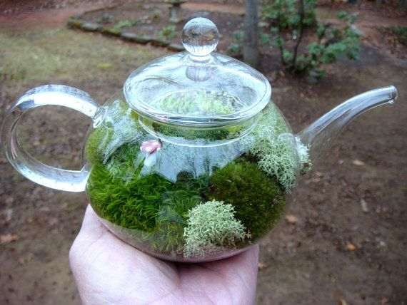 Love this!  Tea Pot Terrarium    by mossterrariums on etsy