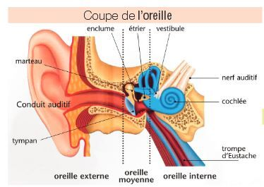 http://www.france-acouphenes.org/index.php/pathologies/automedication-danger