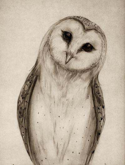 Barn Owl Sketch Art Print - Isaiah K. Stephens