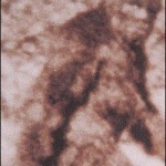 Is Bigfoot Real  .........................................................  http://klowmeister.com/is-bigfoot-real.html/