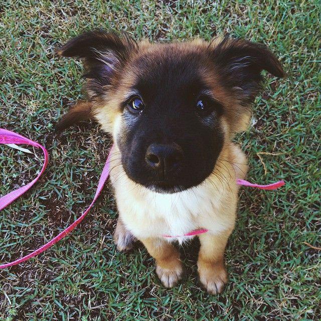 cutie boy