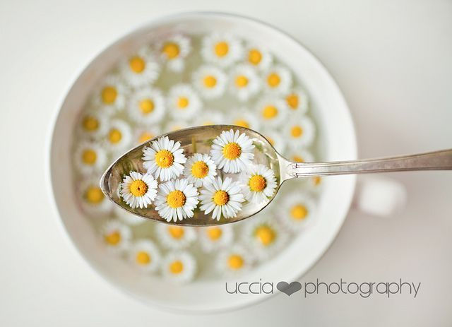 uccia photography flickr - a bowl of sunshine!