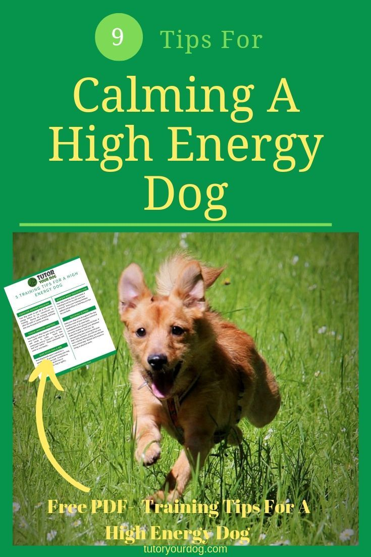 9 Tips For Calming A High Energy Dog Dog Training Online Dog