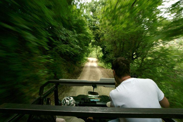 Driving through the forest #rapsani #tsantali #wine #adventure #epxerience #oenotourism