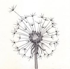 line drawing dandelion | Go Back > Pics For > Cute Pencil Drawings Tumblr                                                                                                                                                      More