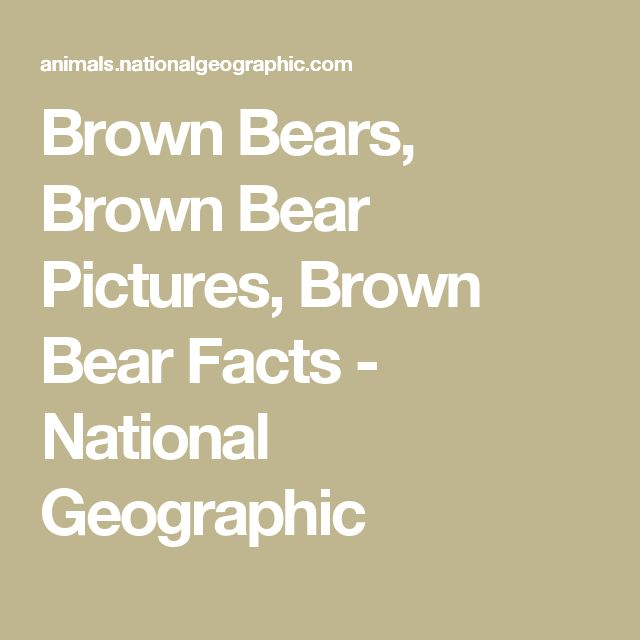 Brown Bears, Brown Bear Pictures, Brown Bear Facts - National Geographic