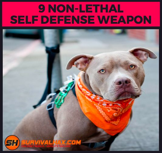 Even if you live in a peaceful neighborhood and run a wholesome family business, you're eventually going to encounter trouble. If you think that a scumbag will go easy on you because you're a petite young lady, think again. Thankfully there are a lot of Self-Defense options available. Here are 9 Self-Defense Weapons that will Put Your Attacker in the Hospital, not the morgue.