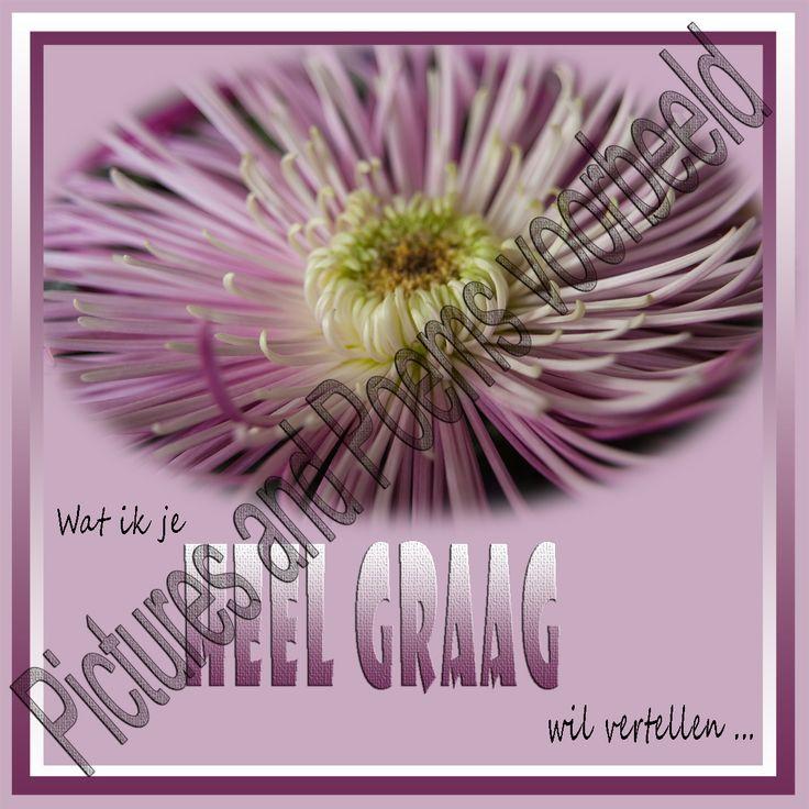 Foto 41 Wil vertellen. Een kleurige chrysant in een bos bloemen, het blijft mooi.