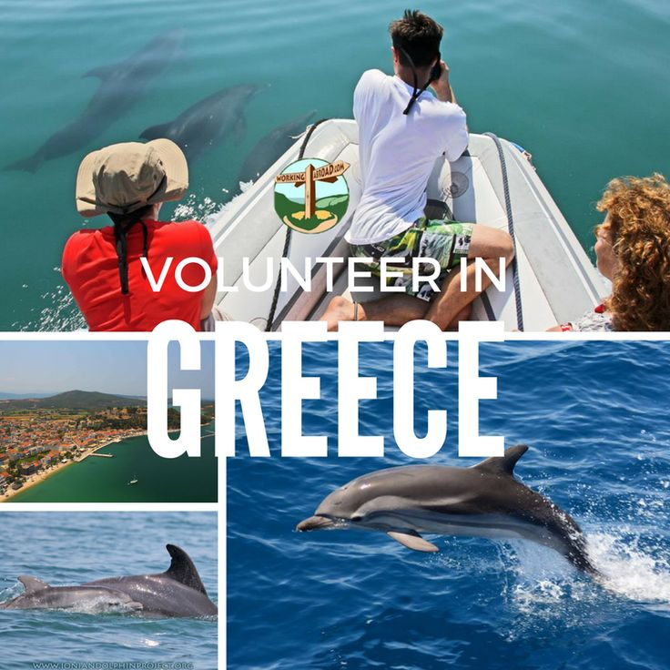 How are you planning to spend your summer this year? Why not assist with dolphin research in Greece?! Check link in bio.