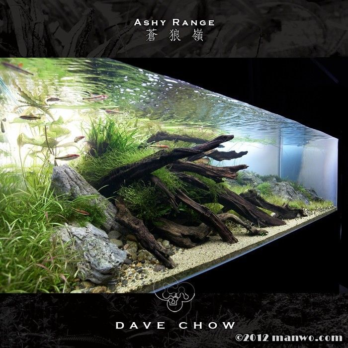 17 best images about freshwater on pinterest pond life for Best freshwater aquarium fish combination