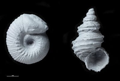 A Virtual 3D Printable Fossil Collection