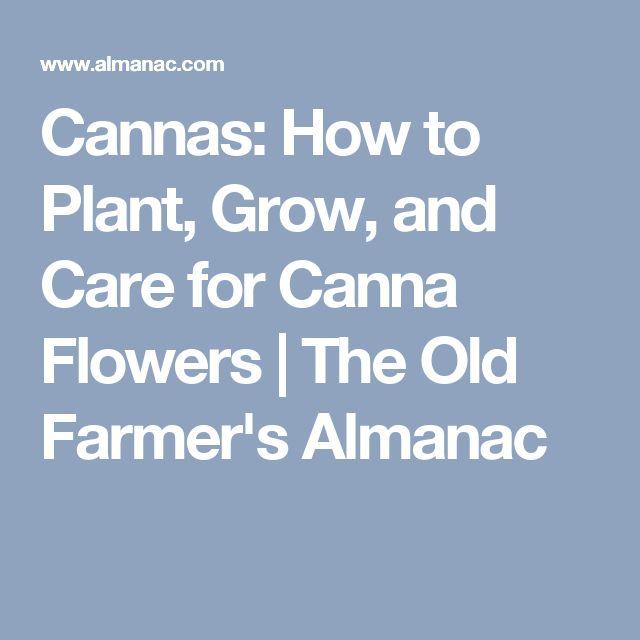 Cannas: How to Plant, Grow, and Care for Canna Flowers | The Old Farmer's Almanac