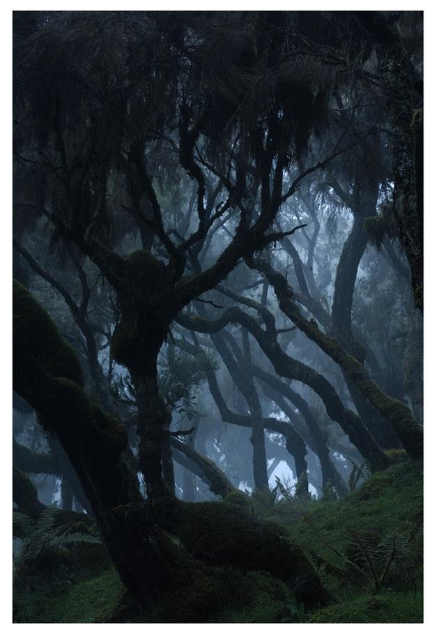 Vincent Munier, photographe de la nature