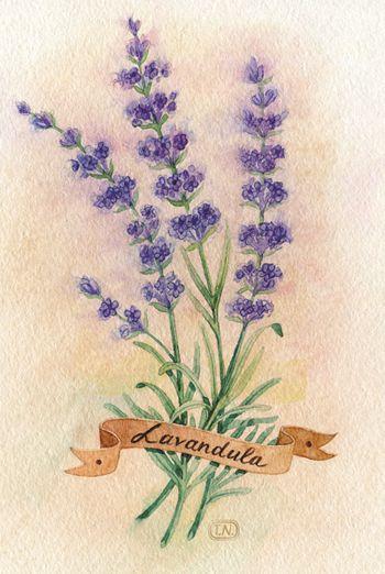 la Provence by Natalia Tyulkina, via Behance