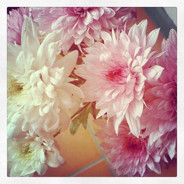 .@Incognito7dcv CarelessWhisper | Autumn flowers 3