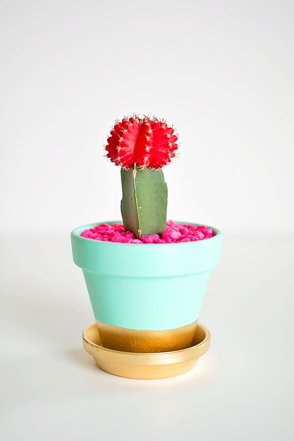 DIY gold dipped plant pot with pink rocks.