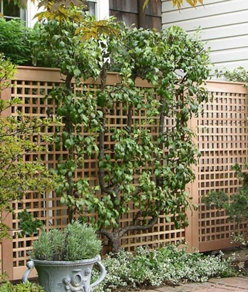 lattice landscape ideas