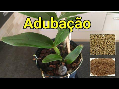 Adubos para Orquídeas   Dicas para iniciantes - YouTube