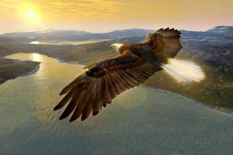 Bald Eagle In Flight, Artwork Photographic Print by Studio Macbeth at AllPosters.com