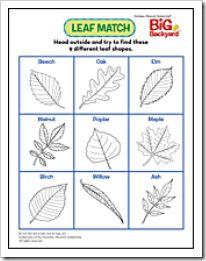 9 tipi di foglia da raccogliere in autunno (gioco pdf da scaricare) {Green.itudine del 17 ottobre 2011}