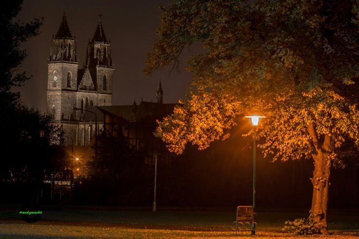 Stadtpark mit Domblick   #andymacht_pix #dom #magdeburgerdom #magdeburg #sachsenanhalt #rotehorn