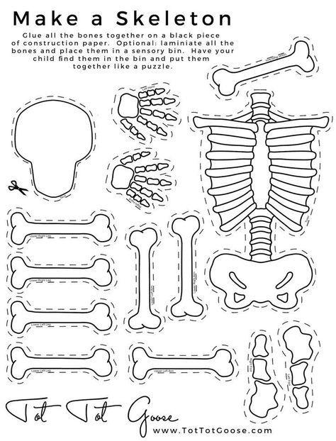 34 best Human Anatomy: Bones images on Pinterest