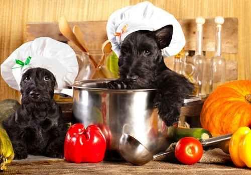 4 gustose ricette per il tuo pet cagnolino cucciolo Senza dubbio, comprare una scatoletta o del cibo già pronto è il modo più immediato per nutrire il nostro cucciolo. Ma preparargli un gustoso manicaretto in casa è certamente più divertente e gli evi
