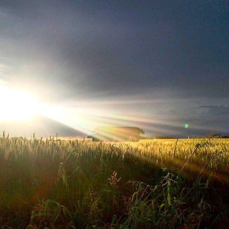 After the storm the sun comes...  Dopo la tempesta arriva sempre il sereno. In questo periodo il meteo è folle folle quanto le nostre giornate. Ma ormai lo sappiamo il sole arriva sempre basta saper aspettare.  E con lui la nostra partenza...    #PDream17 #brianza #igersbrianza #igerslombardia #inlombardia #storm #sun #sunbeam #rain #trip #travel #travelphotography #travelling #wonderlust #mobile #mobilephotography #jj_mobilephotography #wheat