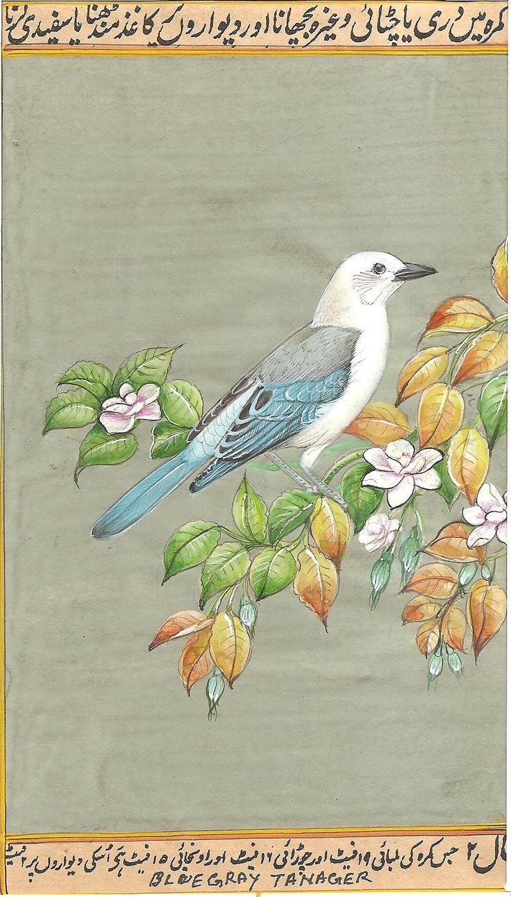 Blue Gray Tanager Bird Miniature Art