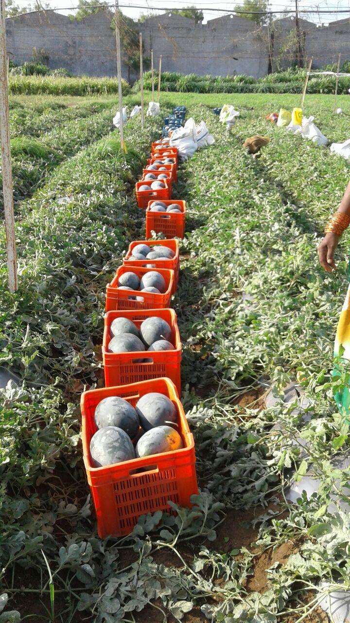 Despite Droughts, This Maharashtra Farmer Is Earning Lakhs