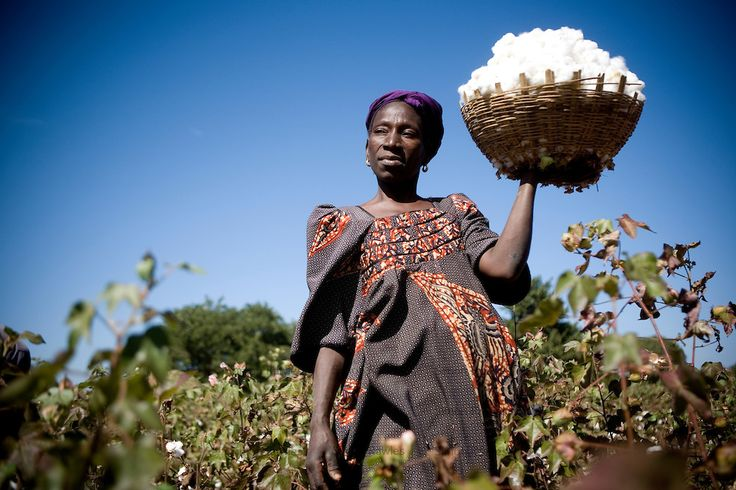 Image result for cotton farmers