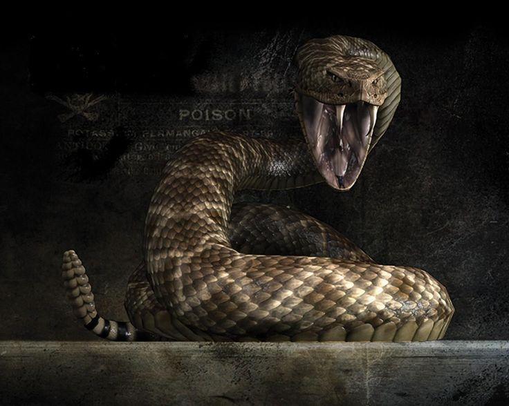 Viper Snake Wallpapers Wallpaper 1600×1067 Snake Image