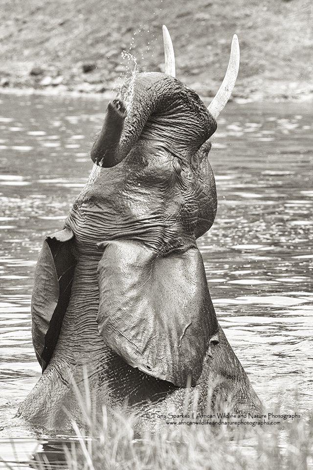 Elephant - Bathing Beauty by Tony Sparkes on 500px
