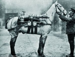 The Day Sir Winston Churchill Saved the War Horses: A little known fact of history is that were it not for Sir Winston Churchill, thousands of war horses would have been left behind at the end of World War I. The idea of abandoning the loyal animals was more than life-long equestrian Sir Winston could stand, so he jumped into action. Read his remarkable story in this blog post today!