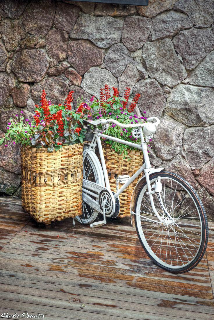 flower n bicycle
