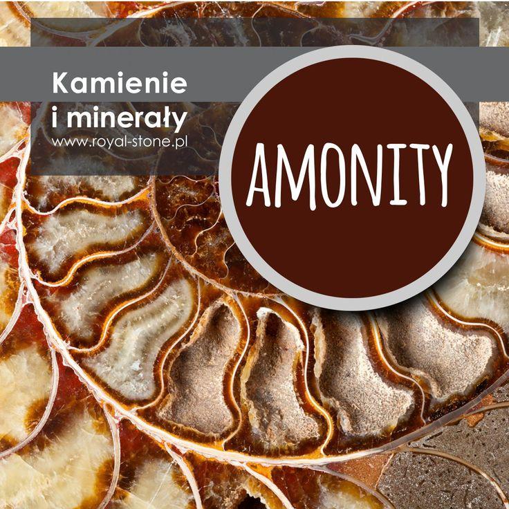 "Amonity i ""boska proporcja"""