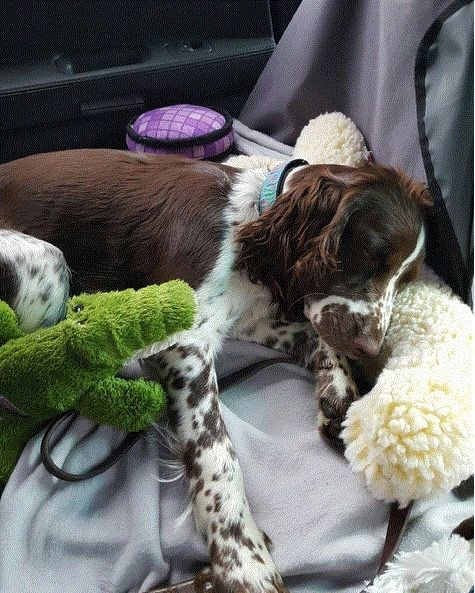 they really love their soft toys...