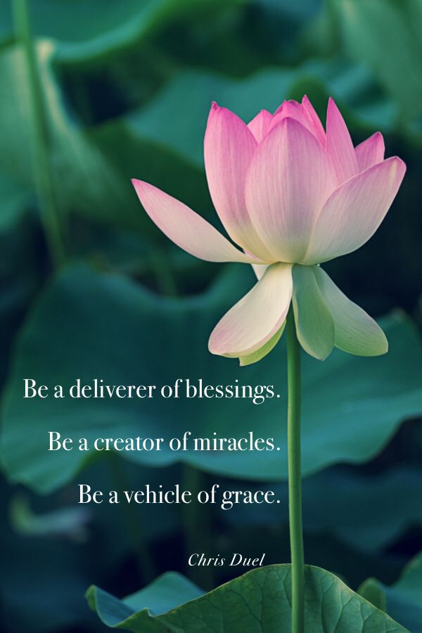 Miracles Quotes : miracles, quotes, Blessings,, Miracles, Grace, Miracle, Quotes,, Flower